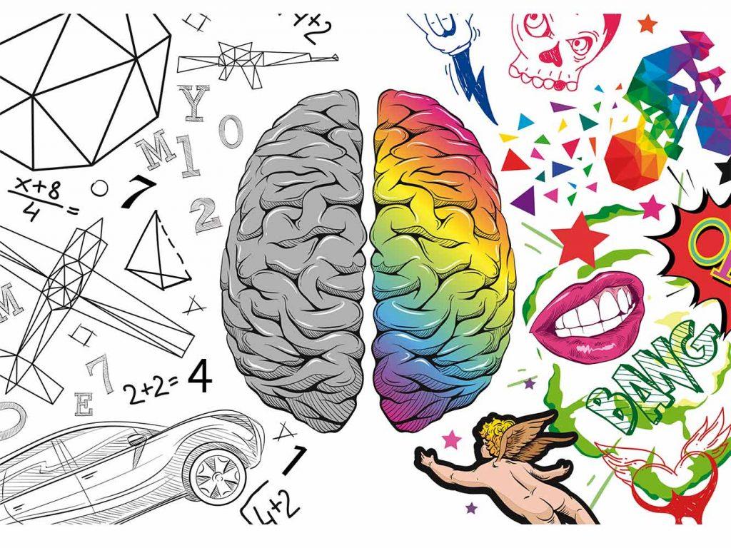 El juego en la infancia no sólo estimula el hemisferio izquierdo del cerebro, muy útil para habilidades cognitivas relacionadas con el cálculo, el razonamiento lógicos, etc. También estimula su lado derecho, donde reside funciones como la creatividad.